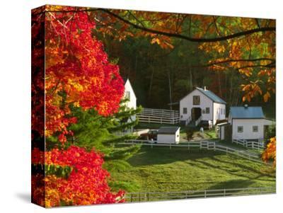 Morning Chores at the Imagination Morgan Horse Farm, Bethel, Vermont, USA