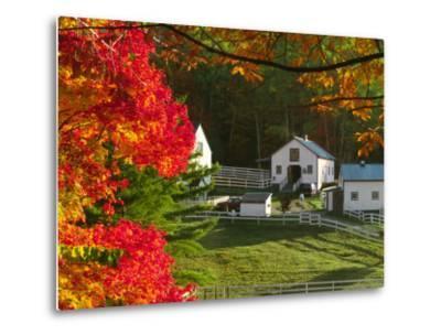 Morning Chores at the Imagination Morgan Horse Farm, Vermont, USA