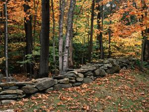 Stone Fence in Vermont, USA by Charles Sleicher