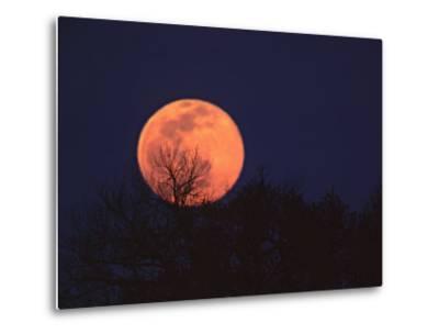 Tree Silhouetted Against Full Moon, Arizona, USA