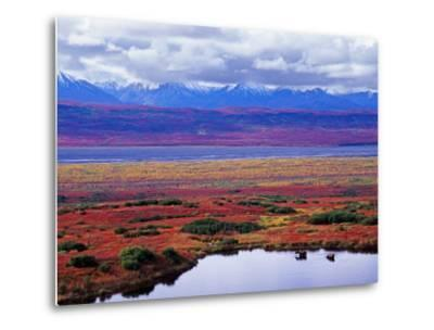 Tundra of Denali National Park with Moose at Pond, Alaska, USA