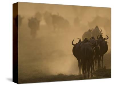 Wildebeest Migration, Tanzania