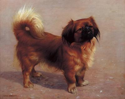 Small Dog by Charles Spencelayh