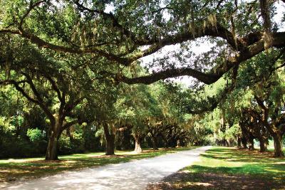 Charleston Oaks 4-Alan Hausenflock-Photographic Print