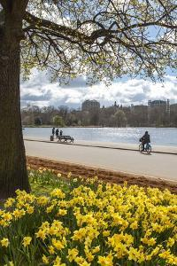 Visitors Walking Along the Serpentine with Daffodils in the Foreground, Hyde Park, London, England by Charlie Harding