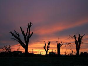 Storm Damaged Trees Silhouetted against the Setting Sun, Greensburg, Kansas, c.2007 by Charlie Riedel