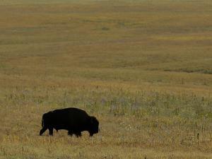 Travel Trip Tallgrass Prairie by Charlie Riedel