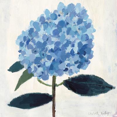 From My Garden - Hydrangea