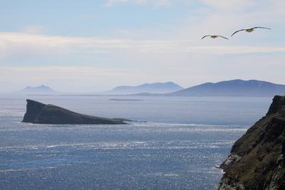 Coastal Cliffs, Falkland Islands
