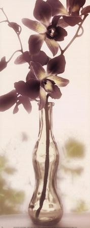 https://imgc.artprintimages.com/img/print/charming-orchid_u-l-f8u81m0.jpg?p=0