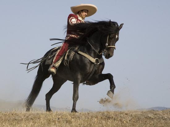 Charro on a Black Andalusian Stallion Galloping in Ojai, California, USA-Carol Walker-Photographic Print