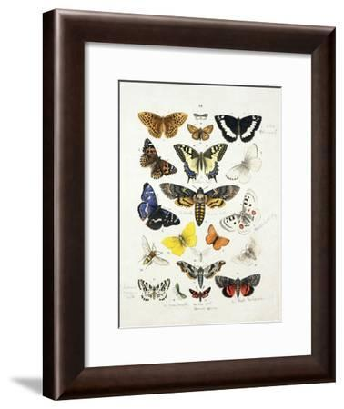 Chart Illustrating Butterflies and Moths, England, 19th Century--Framed Giclee Print