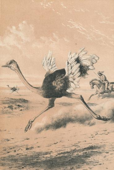 Chasing the Ostrich, c1880--Giclee Print
