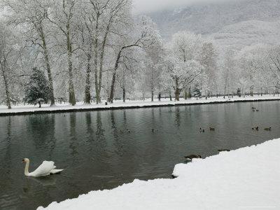 Chateau de Vizille Park, Swan Lake, Vizille, Isere