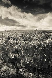 Chateau Lafite Rothschild Vineyards in Autumn, Pauillac, Haut Medoc, Gironde, Aquitaine, France