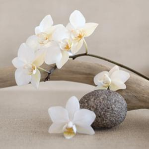 White orchid by Chatelain