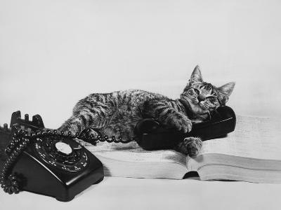 Chatty Cat-Susan Schiff Faludi-Photographic Print
