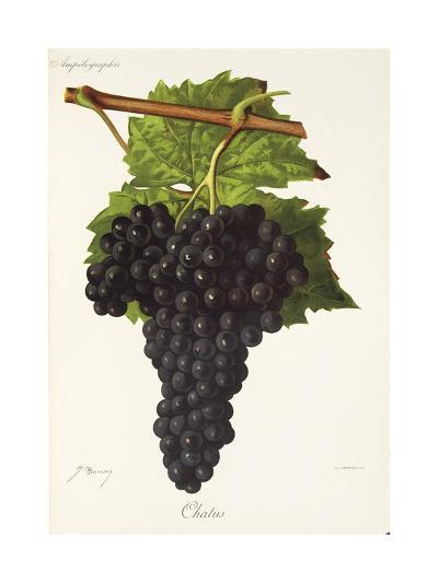 Chatus Grape-J. Troncy-Giclee Print