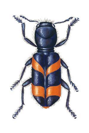 https://imgc.artprintimages.com/img/print/checkered-beetle-trichodes-apiarius-insects_u-l-q135lfc0.jpg?p=0
