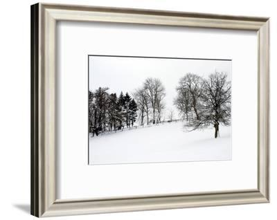 Chedworth natural reserve in winter-Angela Marsh-Framed Photographic Print