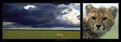 Cheetah and Storm-Michel & Christine Denis-Huot-Art Print