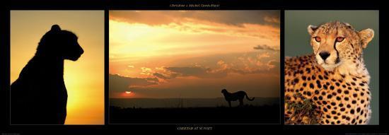 Cheetah at Sunset-Michel & Christine Denis-Huot-Art Print