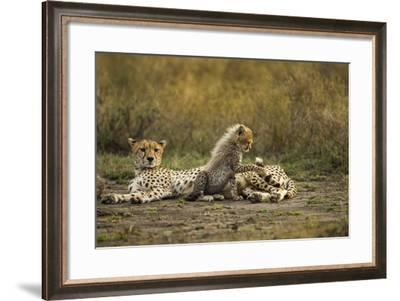 Cheetah Cub and Mother-Paul Souders-Framed Photographic Print