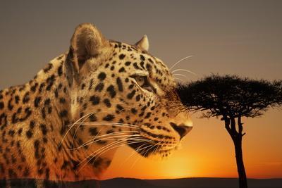https://imgc.artprintimages.com/img/print/cheetah-masai-mara-kenya-east-africa-africa_u-l-po7bqo0.jpg?p=0