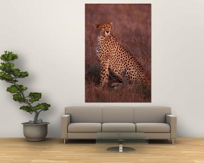 Cheetah, Masai Mara, Kenya-Dee Ann Pederson-Wall Mural