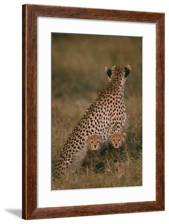 Cheetah with Cubs in Savannah-DLILLC-Framed Photographic Print
