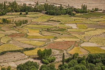 Chemde Monastery, near Karu, Corn Field around Monastery-Guido Cozzi-Photographic Print