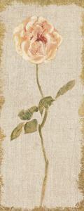 Pale Rose Panel on White Vintage v2 by Cheri Blum