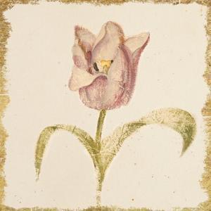 Vintage Blue Parrot Tulip Crop by Cheri Blum