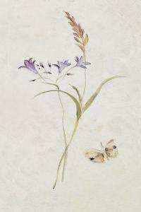 Wild Wallflowers III by Cheri Blum