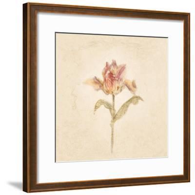 Zoomer Schoon Tulip on White Crop