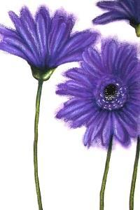 Purple Gerberas 1 by Cherie Roe Dirksen