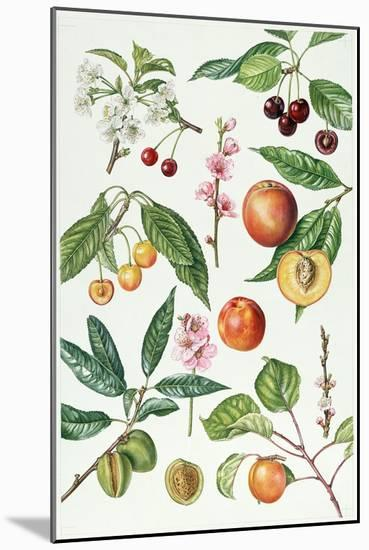Cherries and Other Fruit-Bearing Trees-Elizabeth Rice-Mounted Giclee Print