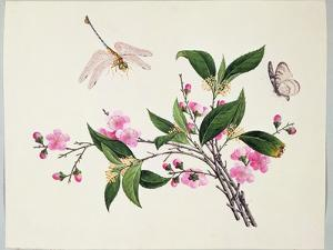 Cherry Blossom (?) Dragonfly and Butterfly