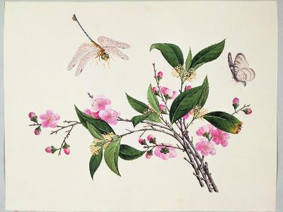 Cherry Blossom (?) Dragonfly and Butterfly--Giclee Print