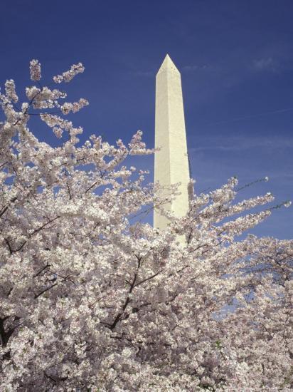 Cherry Blossom Festival and the Washington Monument, Washington DC, USA-Michele Molinari-Photographic Print