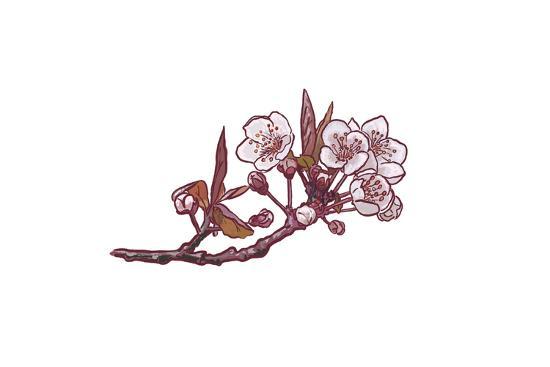 Cherry Blossom - Icon-Lantern Press-Art Print
