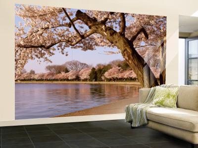 Cherry Blossom Tree along a Lake, Potomac Park, Washington D.C., USA