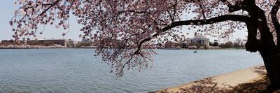 https://imgc.artprintimages.com/img/print/cherry-blossom-trees-with-the-jefferson-memorial-in-the-background-washington-dc-usa_u-l-psmx9i0.jpg?p=0