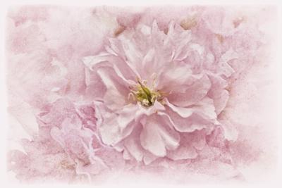 https://imgc.artprintimages.com/img/print/cherry-blossom_u-l-q12uact0.jpg?p=0