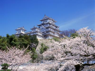Cherry Blossoms and Himeji Castle--Photographic Print