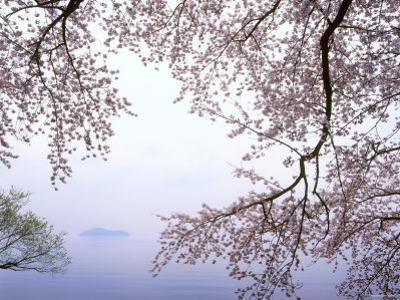 Cherry Blossoms and Lake Biwa