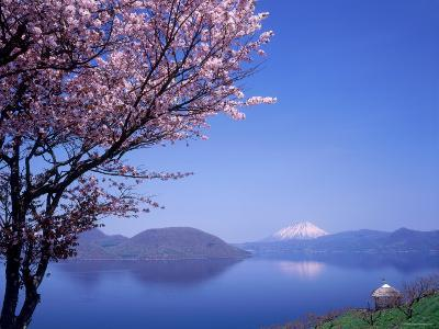 Cherry Blossoms and Lake Toyah--Photographic Print