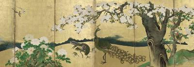 Cherry Blossoms and Peacocks-Kano Sansetsu-Art Print