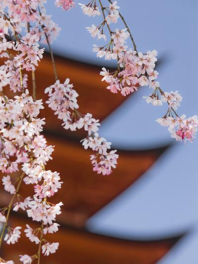 Cherry Blossoms at Itsukushima Jinja Shrine-Rudy Sulgan-Photographic Print