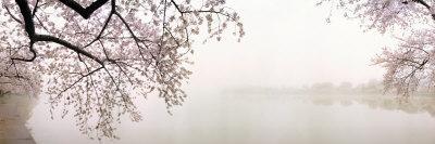 https://imgc.artprintimages.com/img/print/cherry-blossoms-at-the-lakeside-washington-dc-usa_u-l-p8wlkp0.jpg?artPerspective=n